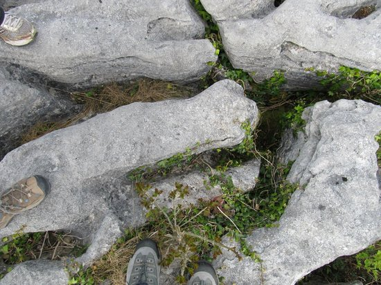 Burren Experience Guided Walks : watch yer step