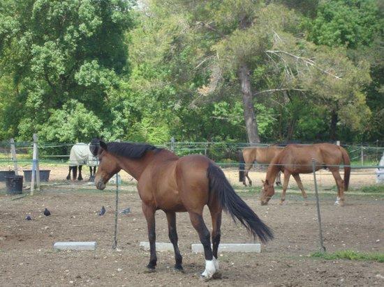 Ici t'es ailleurs : les chevaux de l'écurie privée