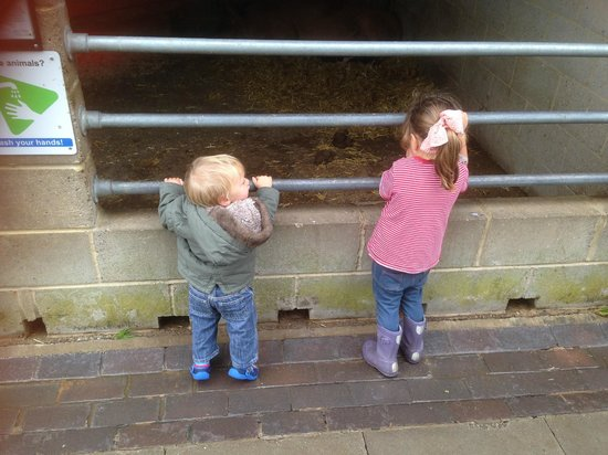 Pets' Corner: Children love it