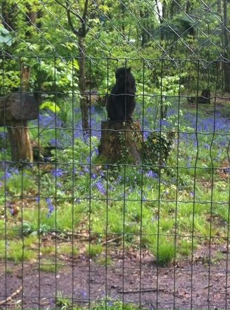 Parc Zoologique Cerza : magnifique panthere noire