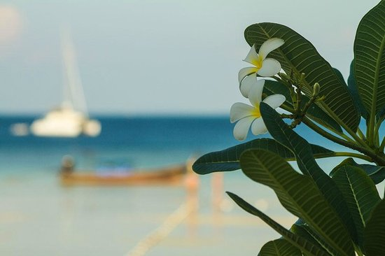 P.P. Erawan Palms Resort: Vista da piscina
