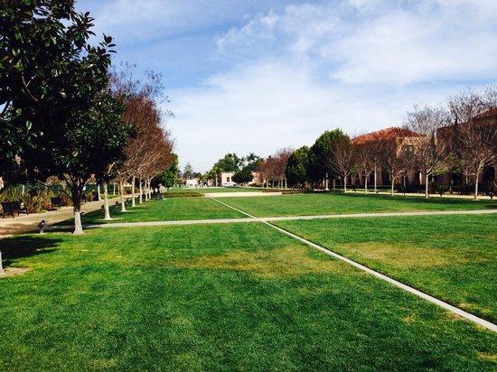 ARTS DISTRICT Liberty Station: Beautiful lawn