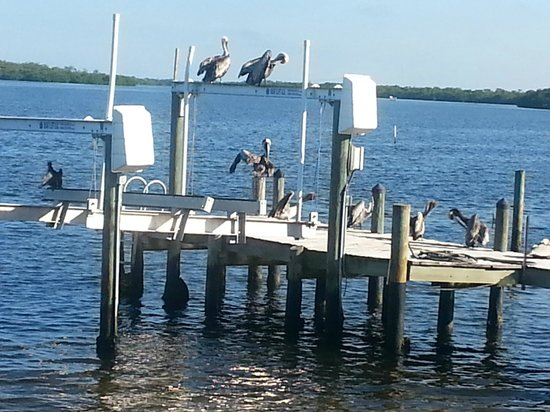 Bridgewater Inn : View from our deck show Anihingas and Pelicans enjoying themselves