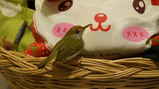 Candle Hut Resort: птицы