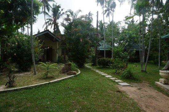 Calm Rest Guest House Mirissa: Hotelanlage