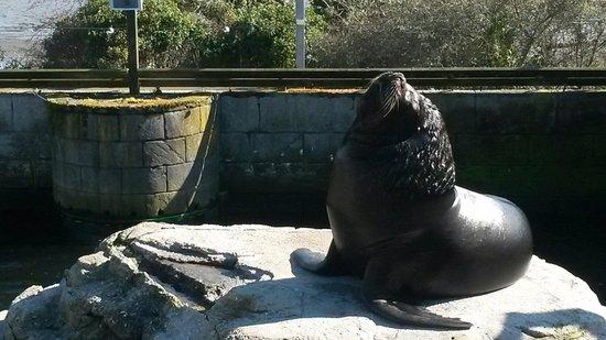 Cornish Seal Sanctuary: Sea lion