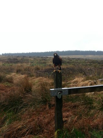 Kielder Water Bird of Prey Centre: hawk walk