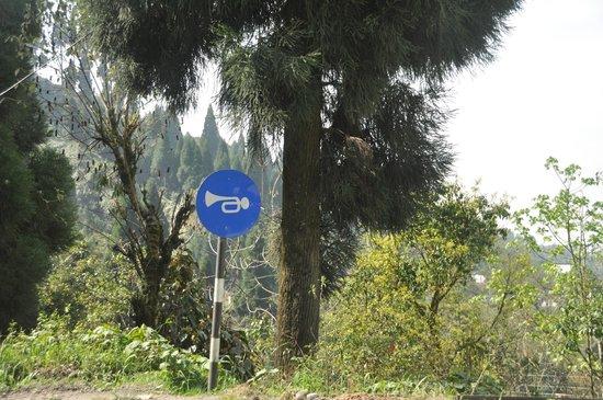 Magnolia Residency: darjeeling panneau