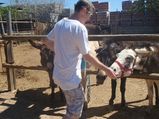 Nerja Donkey Sanctuary: The one that bit me!