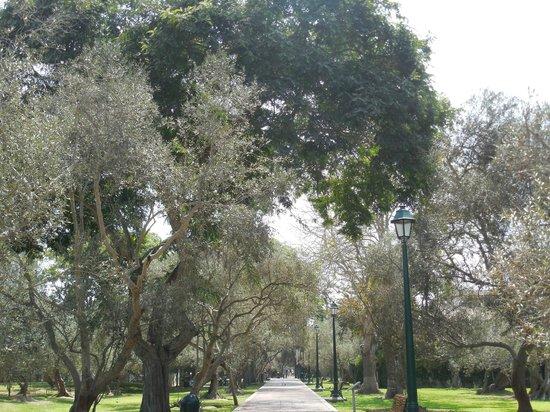 Novotel Lima : Parque das Oliveiras, passeio muito agradável perto do novotel.