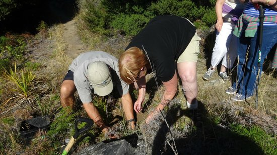 Eco Wanaka Adventures : Helping to restore the island by planting a native tree.