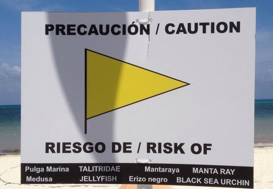 Moon Palace Cancun: Beach sign - sea lice and other warnings