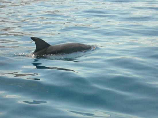 Excursiones de avistamiento de ballenas Flipper Uno: Dolphin