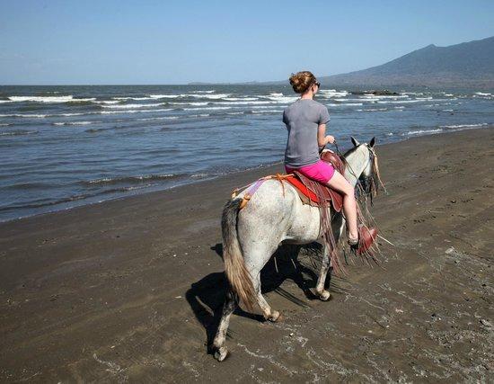 Finca San Juan de la Isla: horses