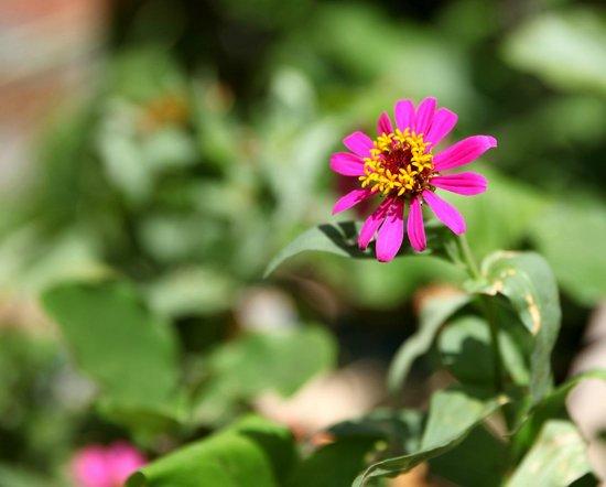 Finca San Juan de la Isla: Flowers