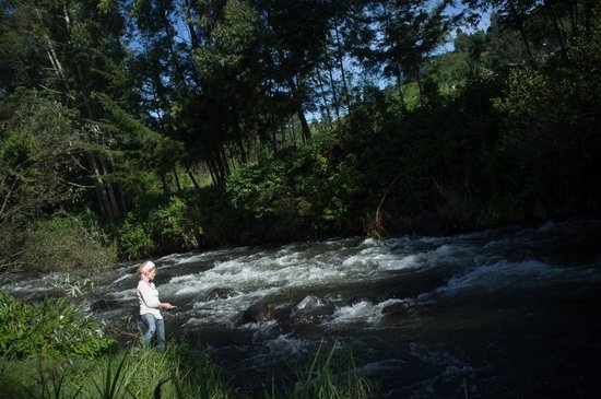 Aberdare Cottages Dream: Fishing