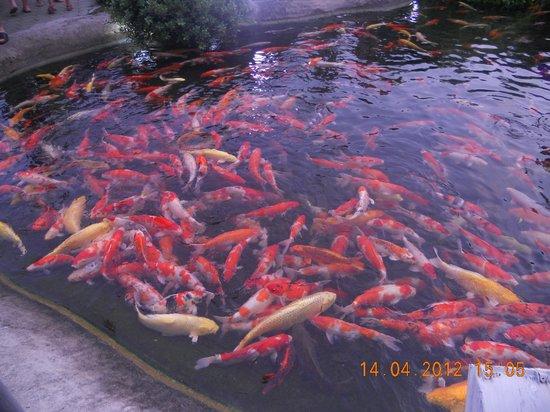 Phuket FantaSea : Рыбки хорошо откормленные