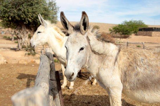 The Alpaca Farm: donkeys