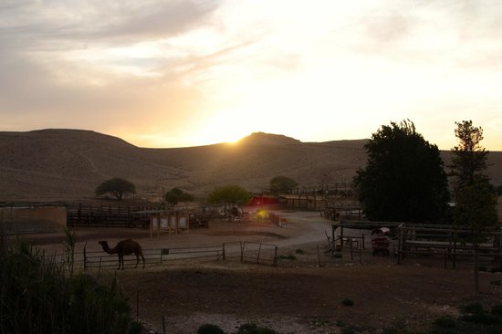 The Alpaca Farm: View from the cabin