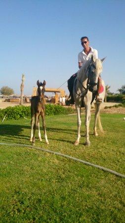 Mercure Hurghada Hotel : Cute baby <3