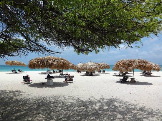 MVC Eagle Beach: Sector de la playa reservado para MVC