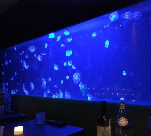 W Fort Lauderdale: 954 Steak House Live Jellyfish in tank