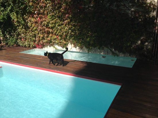 Home Hotel Buenos Aires: House cat