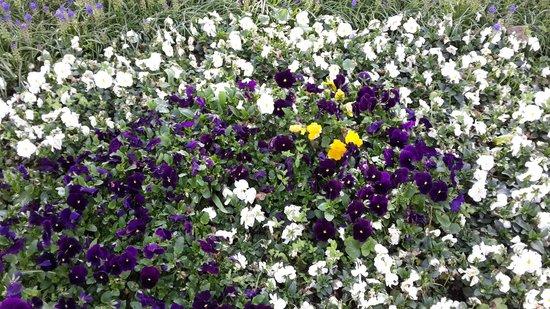 Gulhane Park: И еще цветы )
