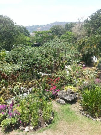 Zamora Estate Hotel : Jardines y bungalows