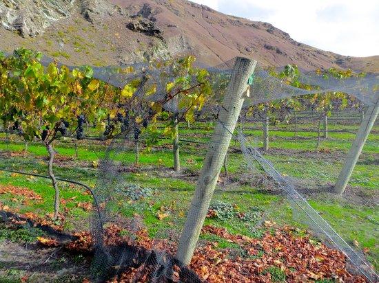 Queenstown Tours: Chard Farm Vineyard