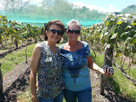 Zamora Estate Hotel: Clientes cosechando uvas