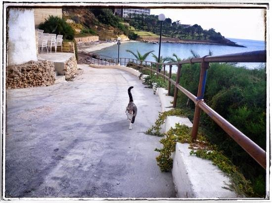 Mellieha Bay Hotel : great waterfront private walks & beach