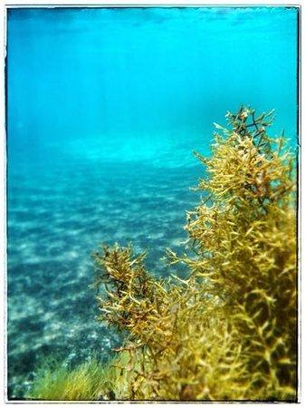 Mellieha Bay Hotel : great snorkeling...