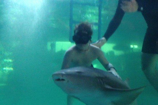 Acuario Mazatlan: swimming with the sharks!