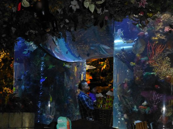 Rainforest Cafe : Entrance