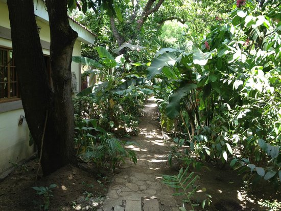 Managua Hills Bed and Breakfast: path to rooms