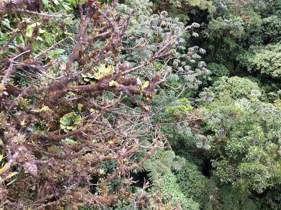 Parque Selvatura: The canopy