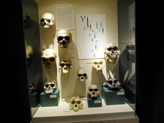 Harvard Museum of Natural History : Skulls