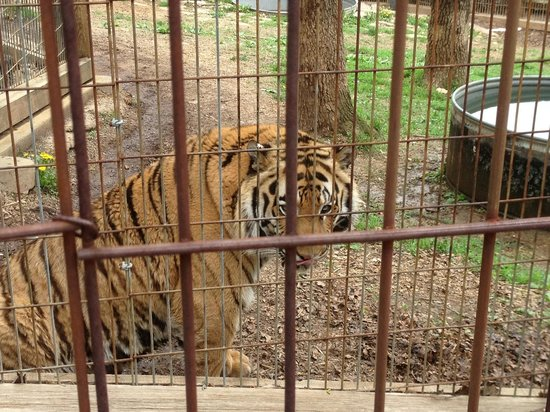 Crown Ridge Tiger Sanctuary -  Tours