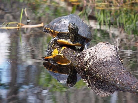 Okefenokee National Wildlife Refuge: Look at my suntan!