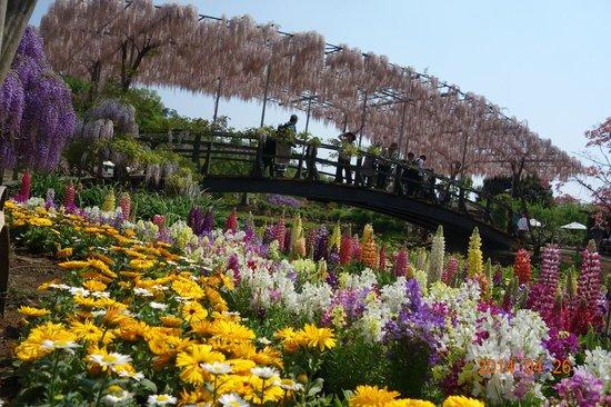 Ashikaga, Japonya: うす紅橋