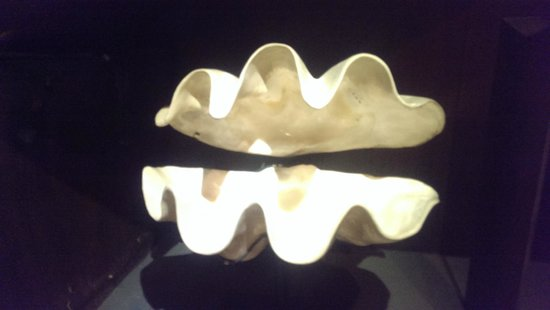 Bali Shell Museum: Giant Clam!