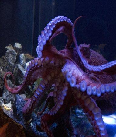 Aquarium Of The Bay San Francisco Ca Top Tips Before You Go With Photos Tripadvisor