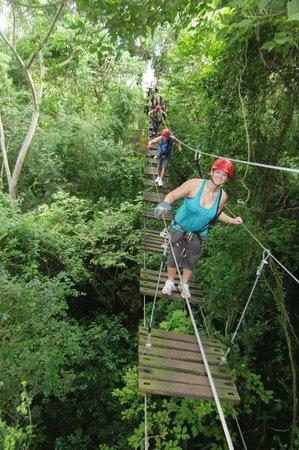 Campo Rico Ziplining Adventure : one of the bridges
