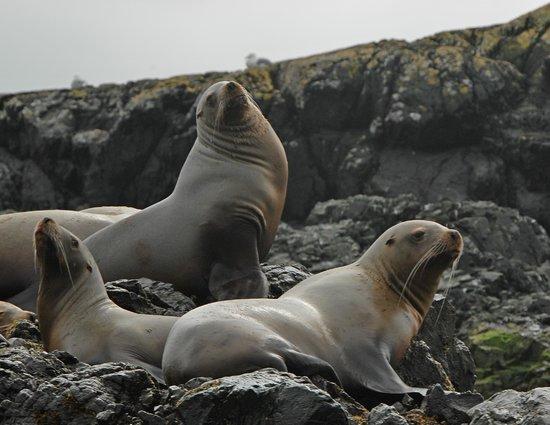 Batstar Adventure Day Tours : Sea lions off of Vasquez island