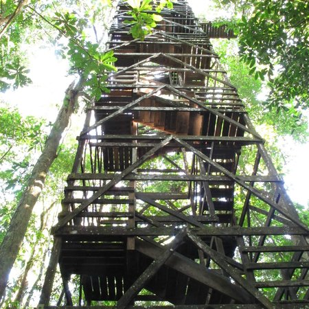 Inkaterra Reserva Amazonica: tower you have to climb for the canopy walk