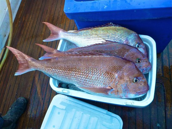 Emu Bay Fishing Charters - Private Charters: Esky full at the end of the day.