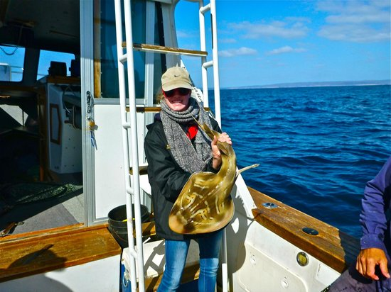Emu Bay Fishing Charters - Private Charters: A ray/shark...nice catch and release.