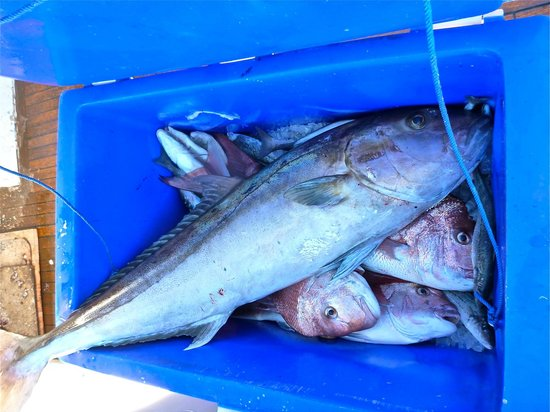 Emu Bay Fishing Charters - Private Charters: 200L Esky not big enough :)