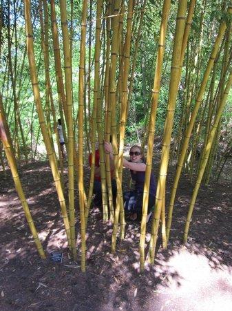 Sarah P. Duke Gardens : hiding in the bamboo